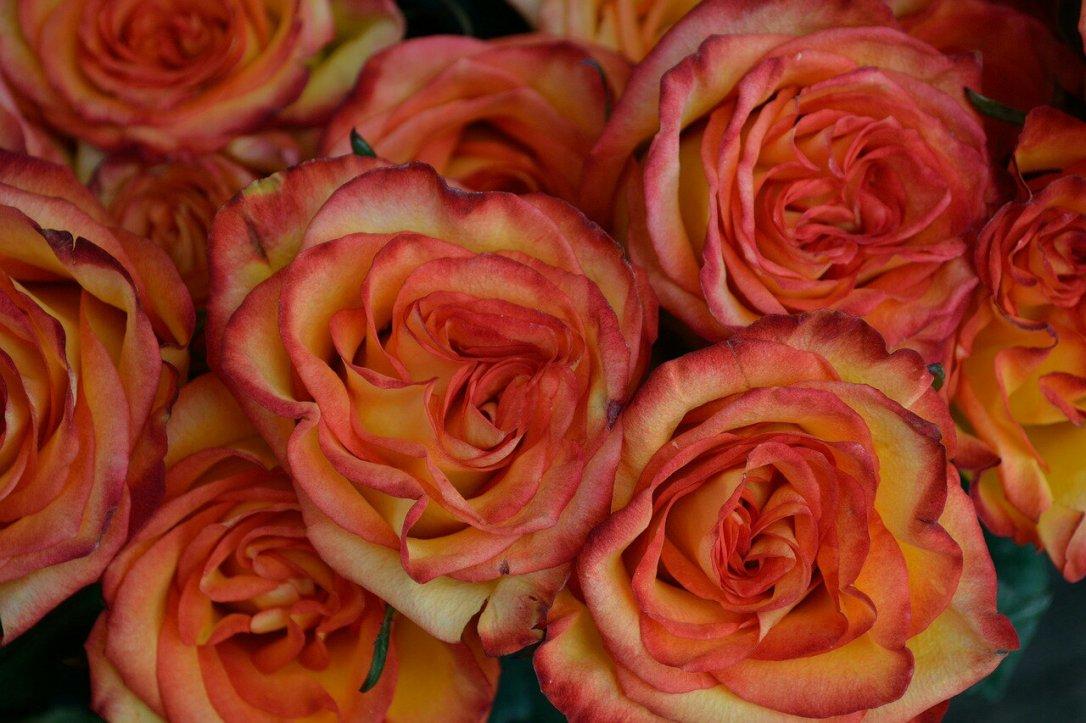 red-flowers-2727664_1280648044541.jpg